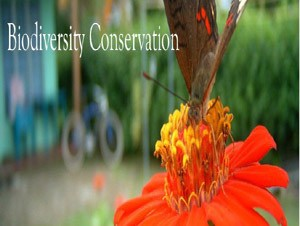 Why conservation of diversity is the need